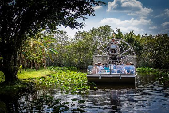 Explore the Everglades!